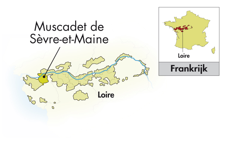 Domaine R de la Grange Muscadet Sèvre et Maine sur lie